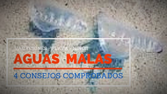Jellyfish, aguas malas